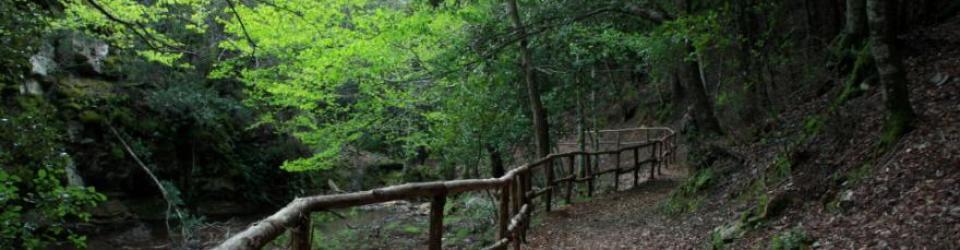 sentiero-foresta